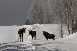 Lappland 2020